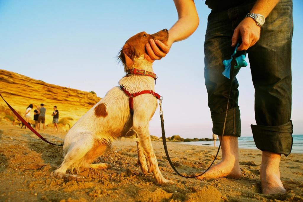 Reportaje de Fotos con Perro